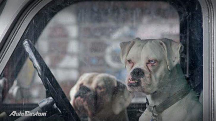 dog-style-autocustom-memes-carros-cachorros-capa-2